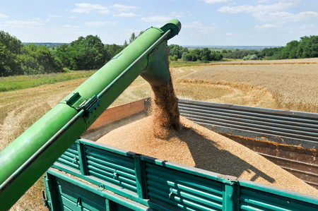 harvest time: Combine harvester load wheat in the truck at the time of harvest in a sunny summer day Stock Photo