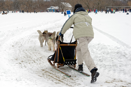 Kharkiv, Ukraine - January 14, 2017: Musher and his sled team on raceway during the Winter Dog Festival in Kharkiv Oblast, Ukraine on January 14, 2017 Editorial