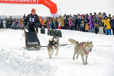 mushing: Kharkiv, Ukraine - January 14, 2017: Musher and his sled team on raceway during the Winter Dog Festival in Kharkiv Oblast, Ukraine on January 14, 2017 Editorial