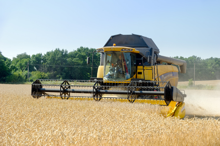 cosechadora: Kharkiv Region, Ukraine - July 25, 2017: Combine harvest wheat on a field in sunny summer day in Kharkiv Region, Ukraine on July 25, 2017.