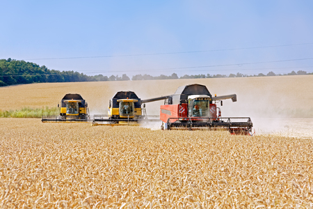 Combines harvests wheat on a field in sunny summer day Stock Photo - 83081980