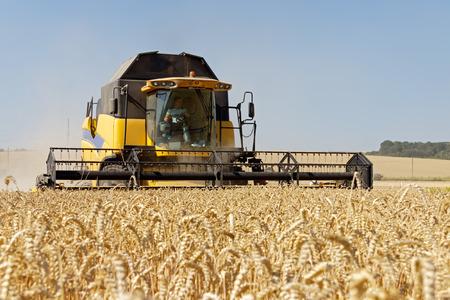 cosechadora: Combine cosechas de trigo en un campo en un día soleado de verano Foto de archivo