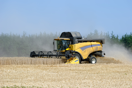Combine harvests wheat on a field in sunny summer day Stock Photo - 83082041