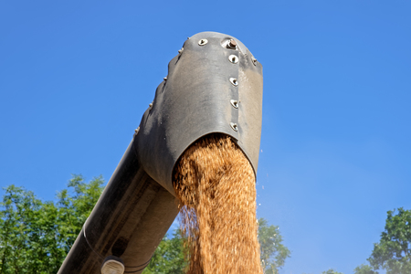 Combine harvester unloading wheat grain into trucks trailer on a bright sunny summer day Stock Photo