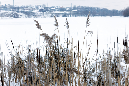 Dry reeds near the winter lake with snow. Background Stock Photo