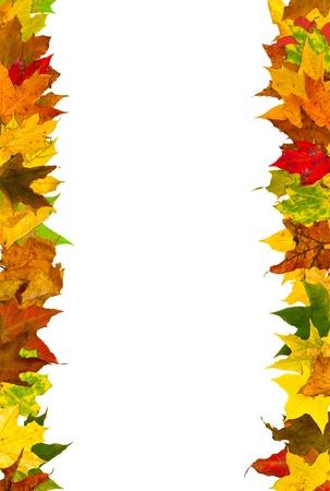 秋の葉のフレーム、白で隔離されます。