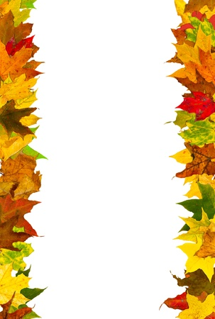 fall decoration: Autumn leaves frame, isolated on white.