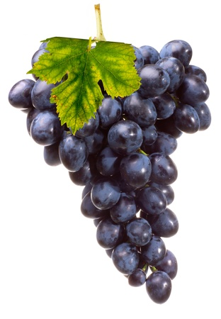 Bunch dark blue grape with leaf, isolated on white background
