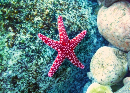 Starfish on a stone under water Stock Photo