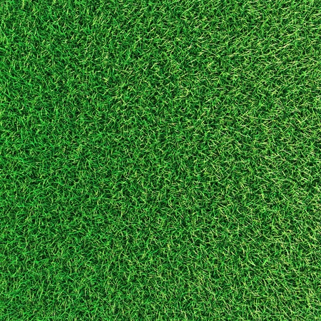 Green grass background texture. photo