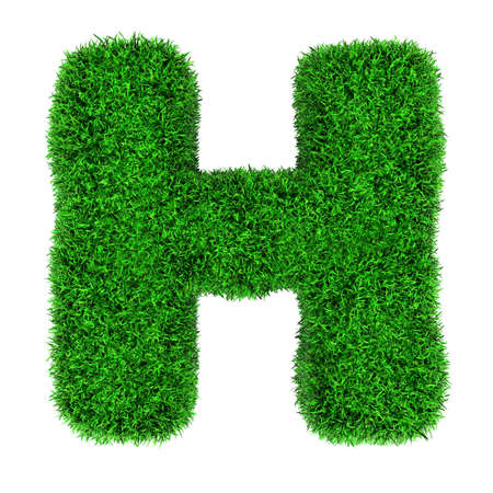 Letter H, made of grass isolated on white background. photo