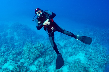 산호초의 배경에있는 다이버