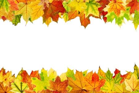 紅葉のフレーム、白で隔離 写真素材