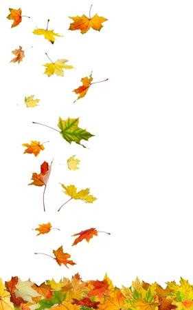 떨어지는 가을에 격리 된 흰색 배경에 나뭇잎.