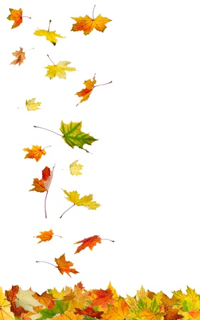 leaves falling: Falling autumn leaves isolated on white background. Stock Photo