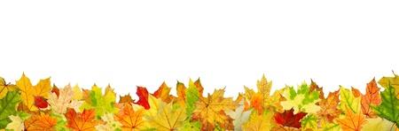 otoño: Modelo inconsútil de las hojas de otoño, en el suelo. Foto de archivo