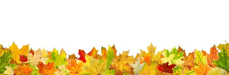 fall leaves: Seamless pattern of autumn leaves, lying on the ground.