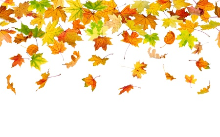 falling leaves: Seamless pattern of autumn leaves, falling down.