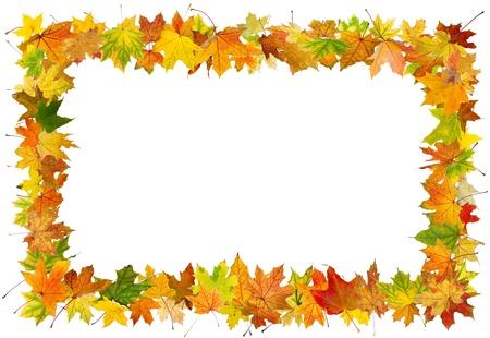 Autumn maple leaves falling frame, isolated on white background.