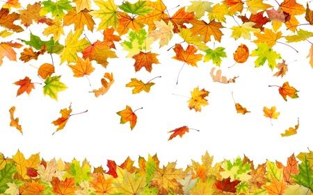 bladeren: Naadloze patroon van dalende herfstbladeren, op een witte achtergrond.