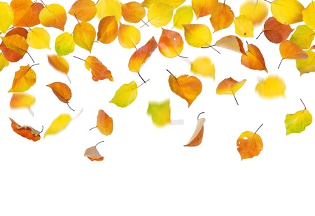 Seamless pattern of autumn leaves, falling down on white background. photo