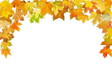 Maple autumn leaves falling border, on white background.