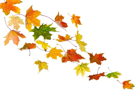falling leaves: Maple colored autumn falling leaves, isolated on white background.