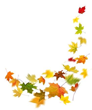 メープル色の秋の落ち葉、白い背景で隔離。