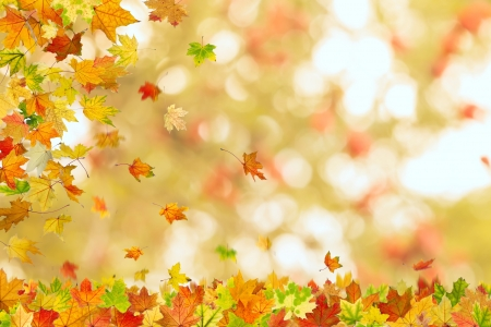 Autumn maple leaves falling down on natural background.