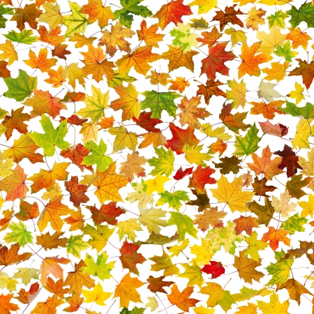 Seamless background of falling autumn leaves, on white.