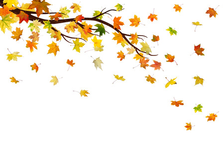 Branch with autumn maple leaves, isolated on white background. photo
