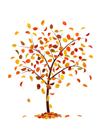 freefall: Autumn tree with pear leaves, isolated on white background. Stock Photo