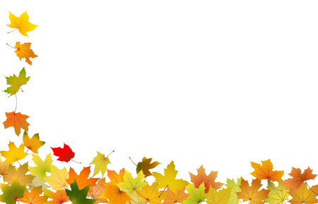 Falling autumn leaves, vector illustration  Vector