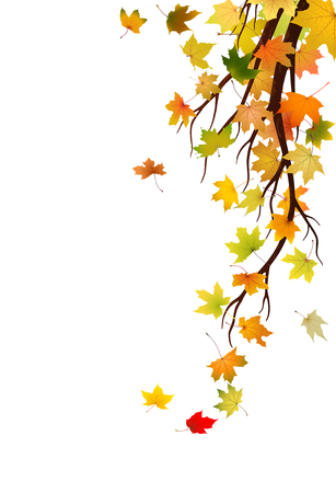 Branch with autumn maple leaves, vector illustration  Vector