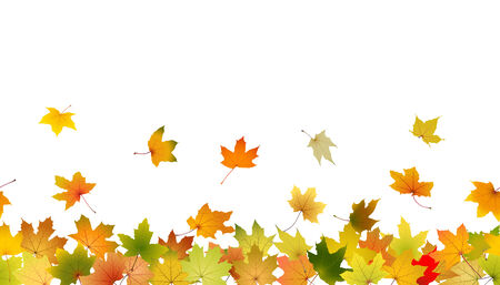 withering: Horizontal seamless pattern of autumn leaves, vector illustration