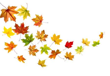 Maple autumn falling leaves, vector illustration  Vettoriali