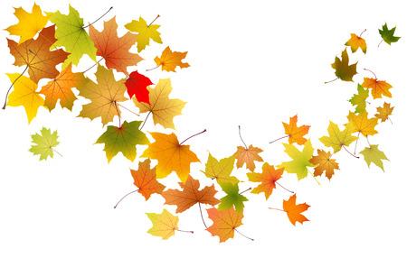 Maple autumn falling leaves, vector illustration  Stock Illustratie