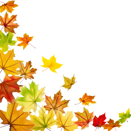 Maple autumn falling leaves, vector illustration  Illustration