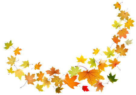 Maple autumn falling leaves, vector illustration. Vector