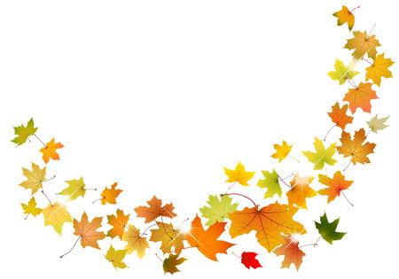 falling leaves: Maple autumn falling leaves, vector illustration.
