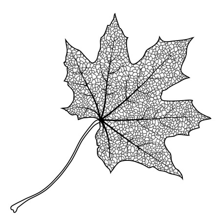 leaf vein: Silhouette of the textured maple leaf, vector illustration.