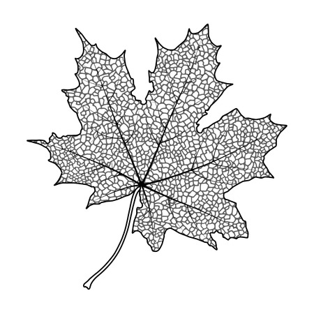 Silhouette of the textured maple leaf, vector illustration. Vector
