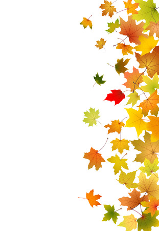 withering: Maple autumn falling leaves, vector illustration.