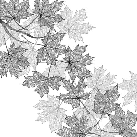 dried leaf: Dry autumn maple leaves silhouettes background, vector illustration.
