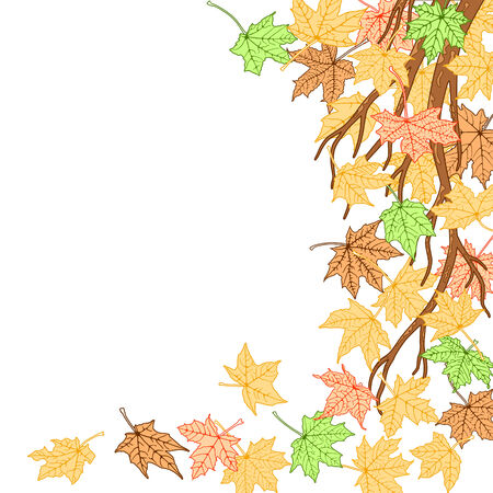 Autumn branch with color autumn maple leaves  background, vector illustration. Vector