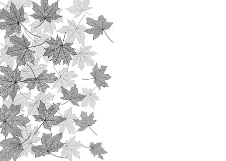 withering: Dry autumn maple leaves silhouettes background, vector illustration.