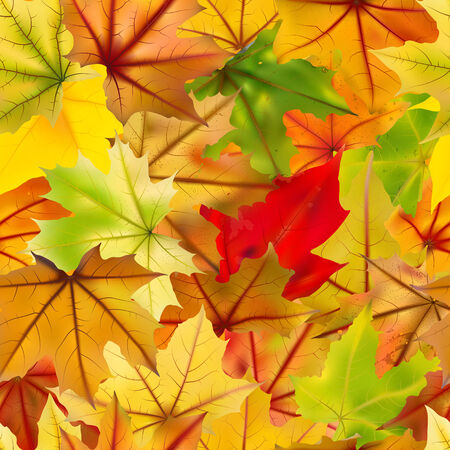 withering: Seamless background of falling autumn maple leaves