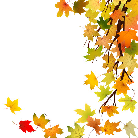 withering: Branch with autumn maple leaves, vector illustration.