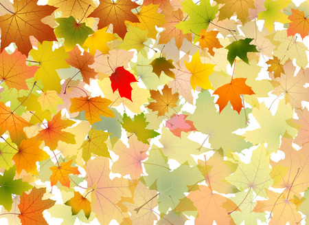 withering: Maple autumn falling leaves background, vector illustration.