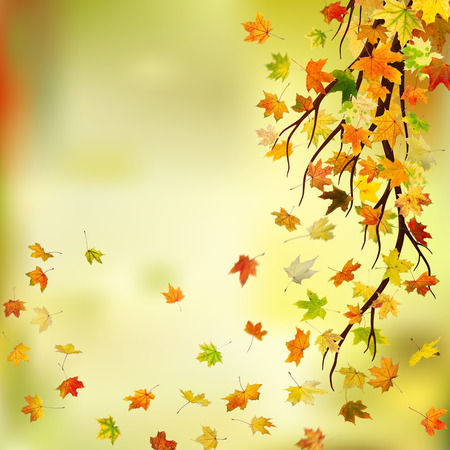 freefall: Branch with autumn maple leaves on natural background. Stock Photo